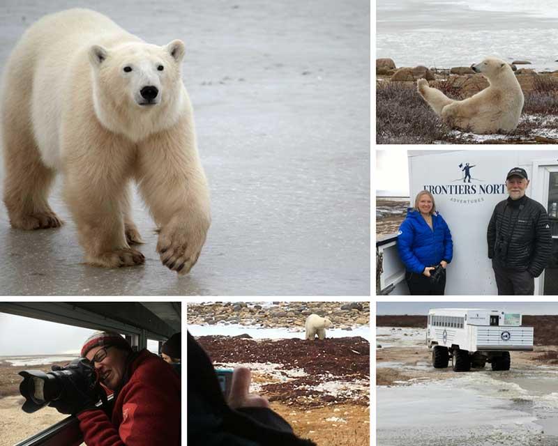How Many Polar Bears Are Left